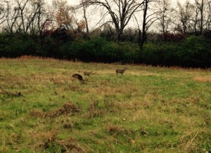 Peeler Park could be called Deer Park...we saw dozens!
